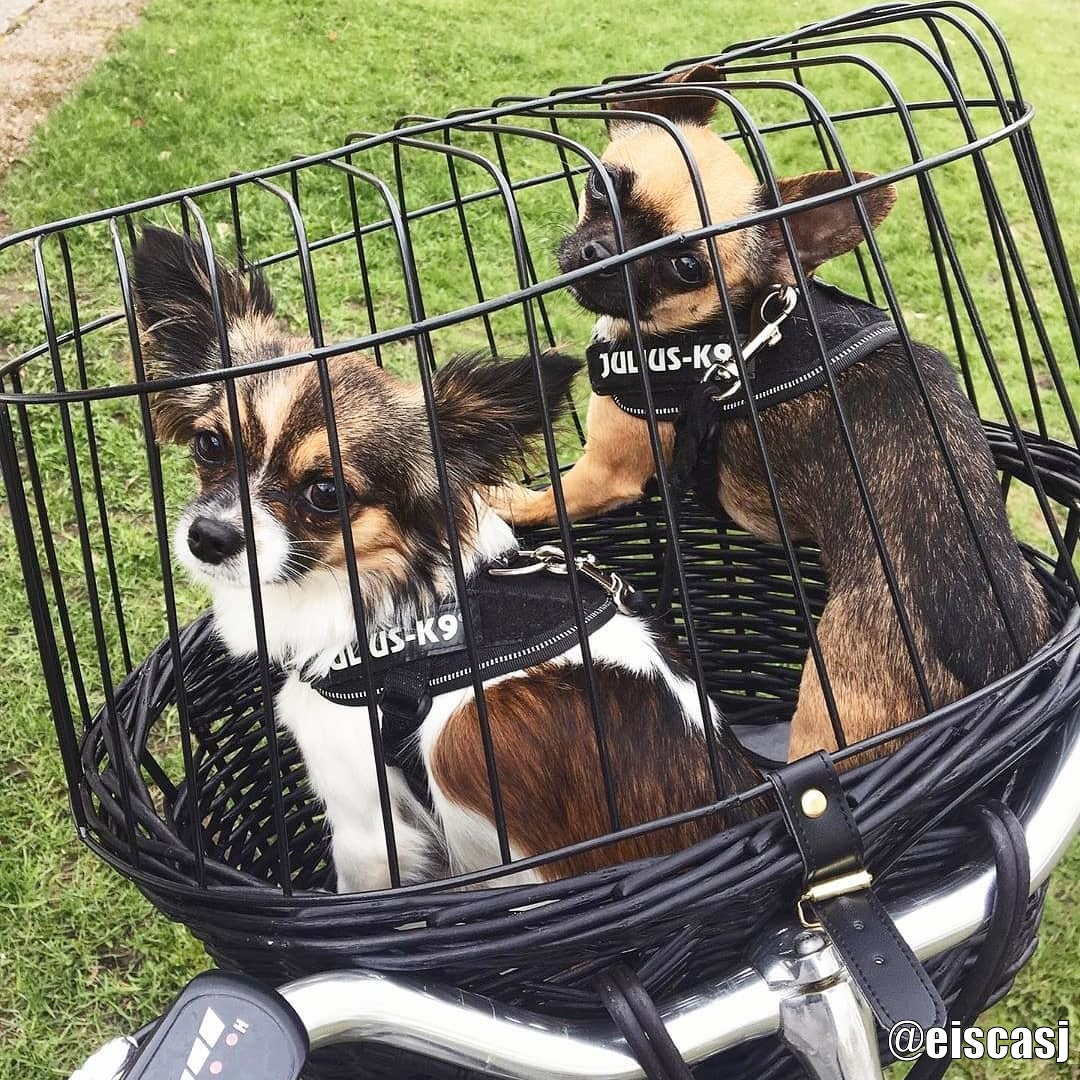 Svart Cykelkorg för Hund 8 kg - Kundbild