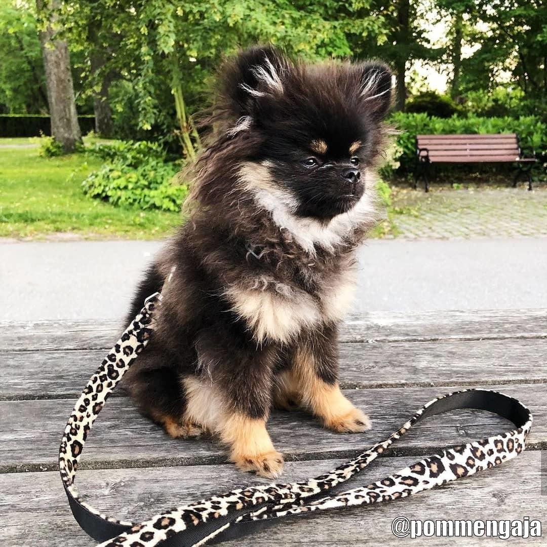 Urban Pup Koppel - Kundbild