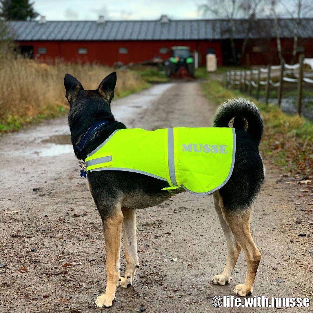 Köp Väska med Tryck till din hund från Tinybuddy.se
