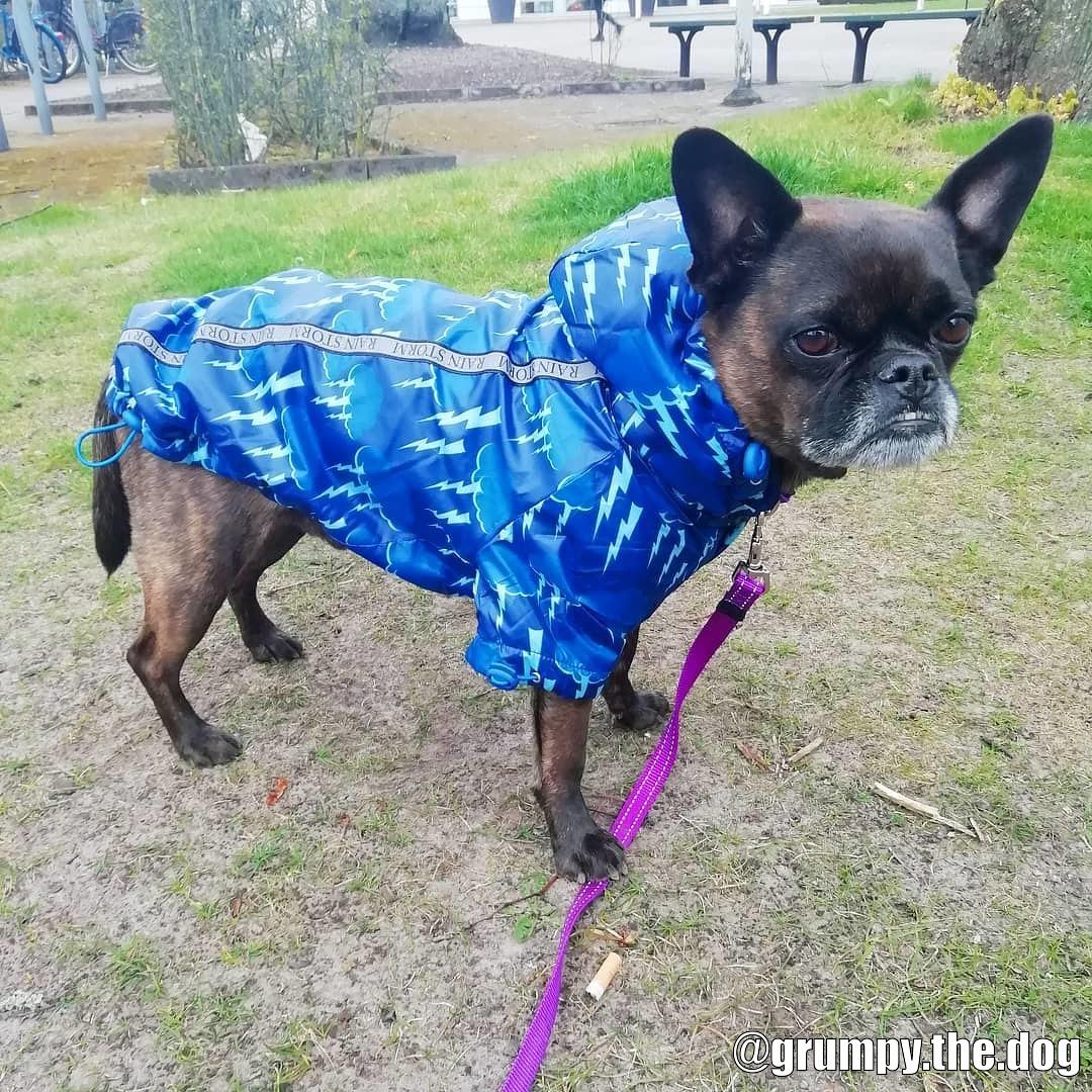 Rainstorm Hundjacka - Kundbild