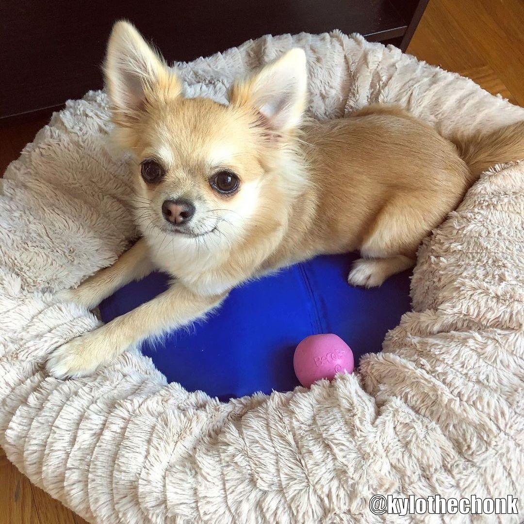 Beco Ball Hundleksak - Kundbild