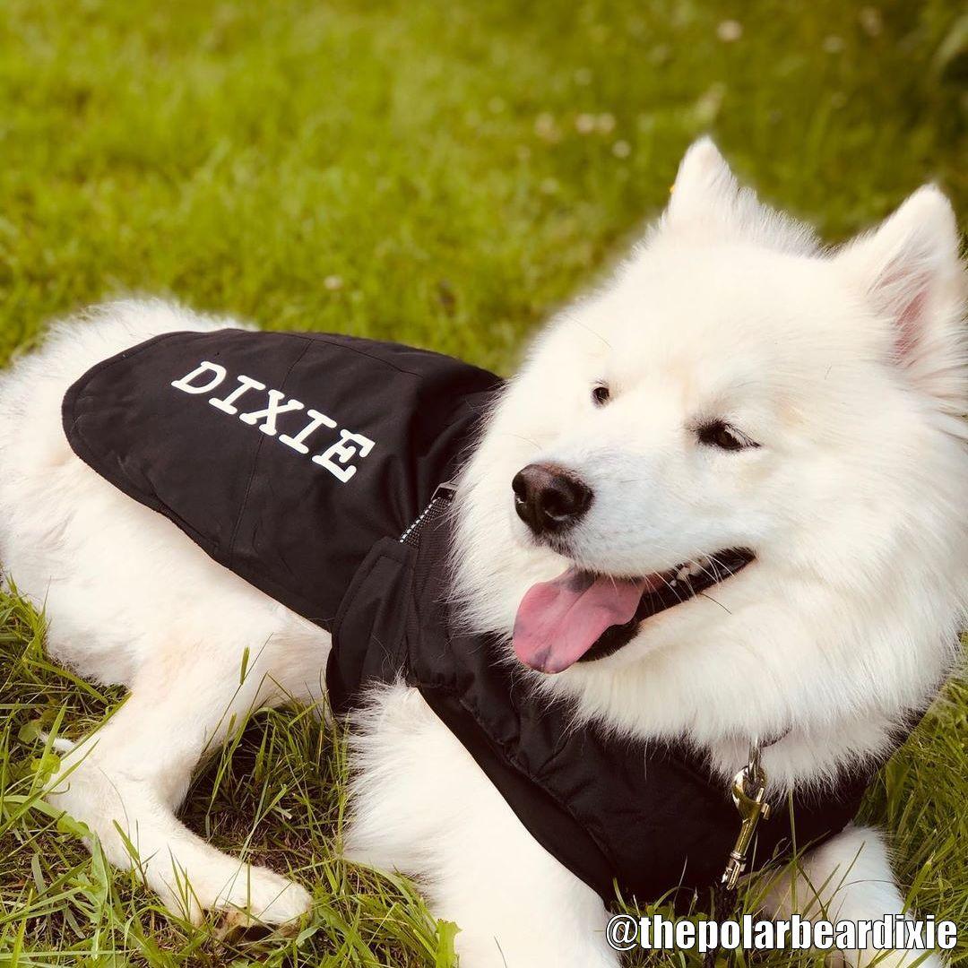 Hundtäcke med Tryck - Kundbild