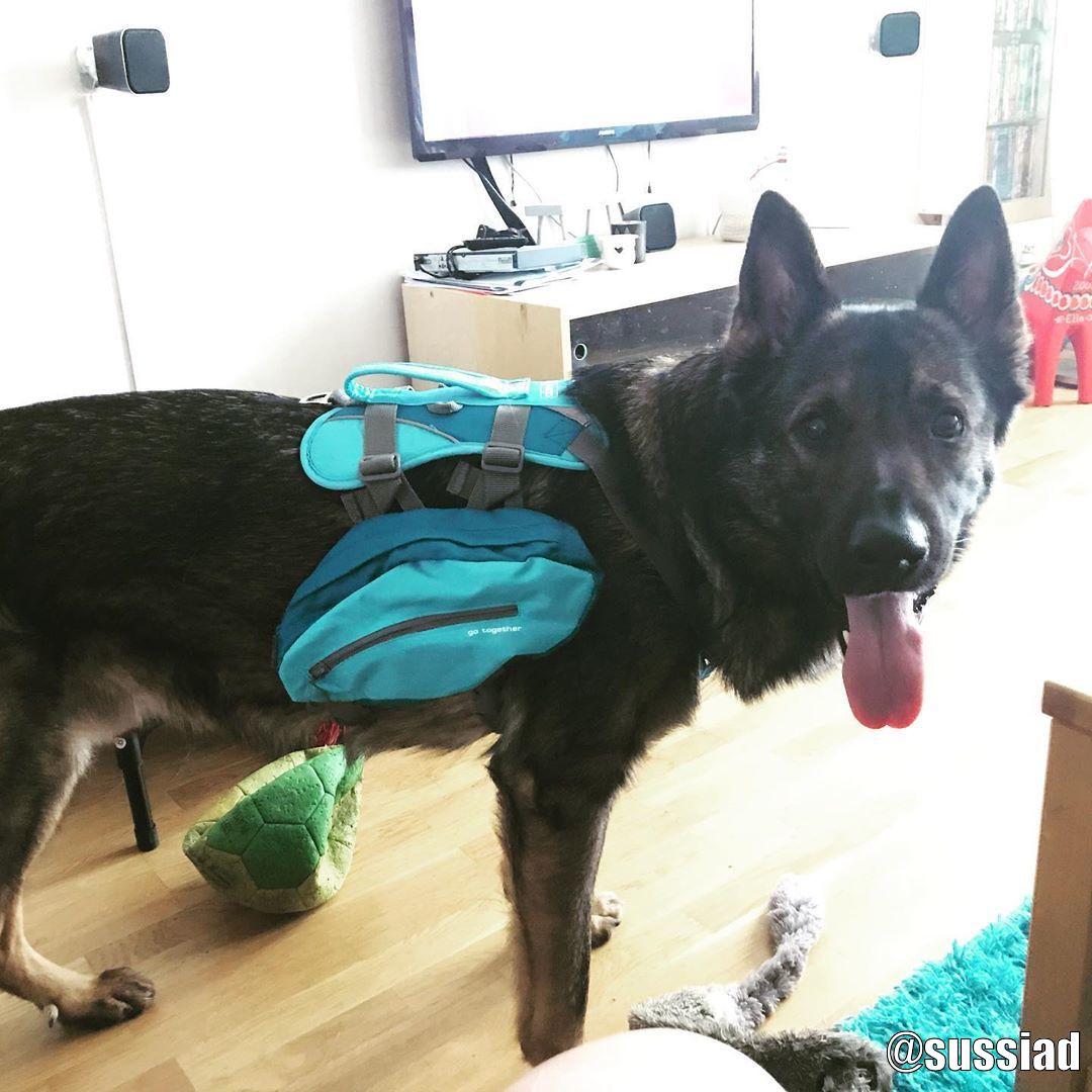 Kurgo Baxter Dog Backpack - Kundbild