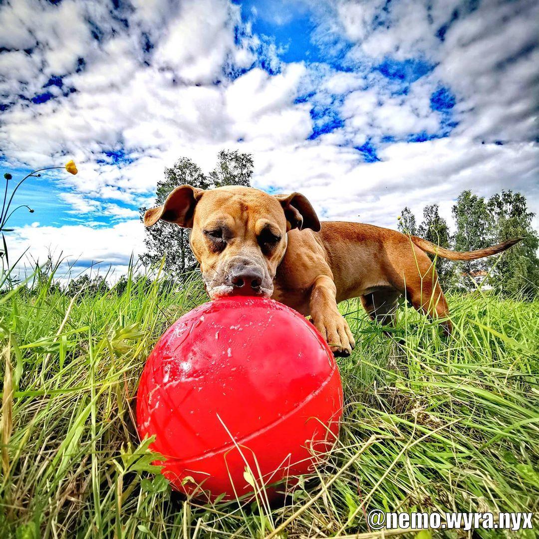 Boomer Ball - Kundbild