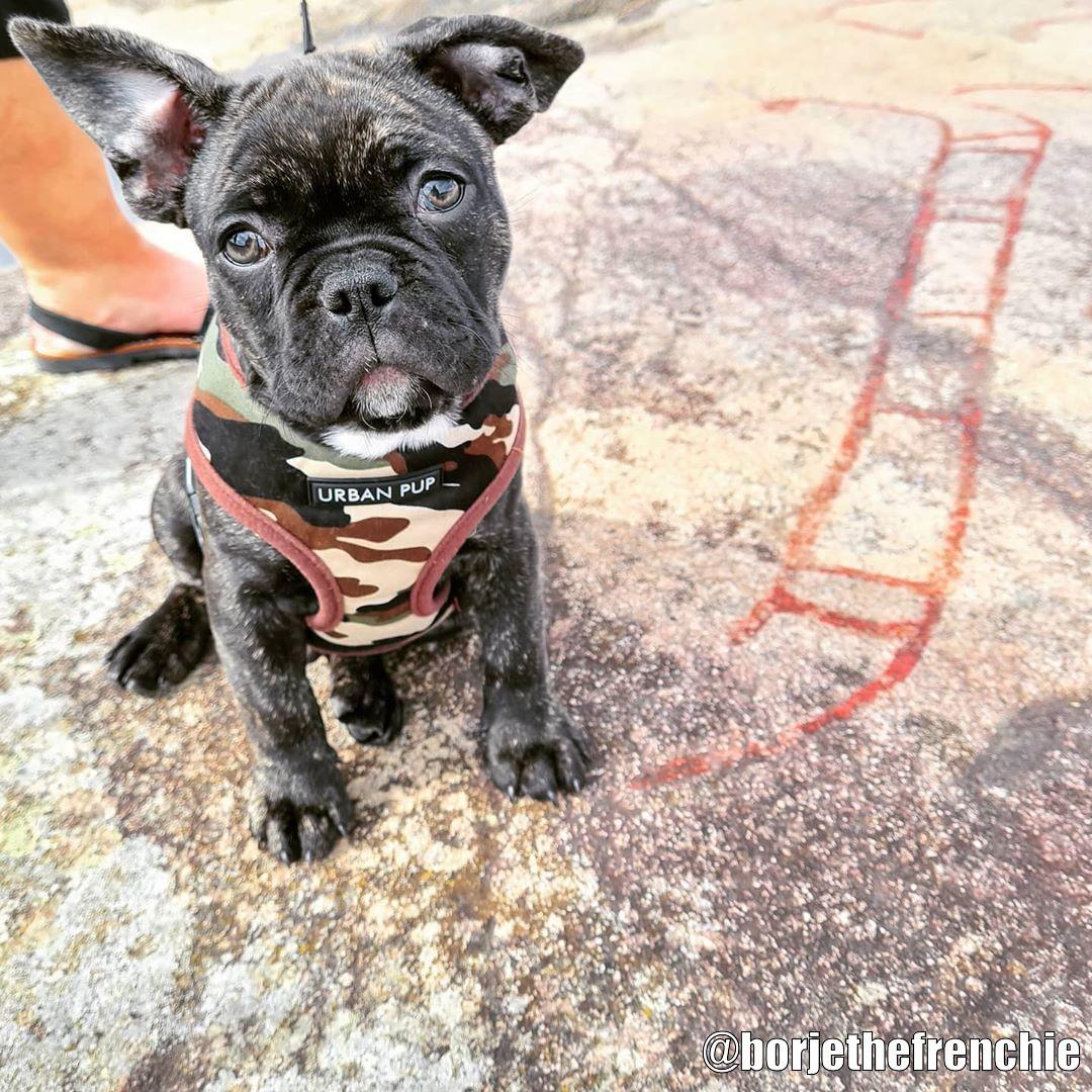Urban Pup Harness - Kundbild