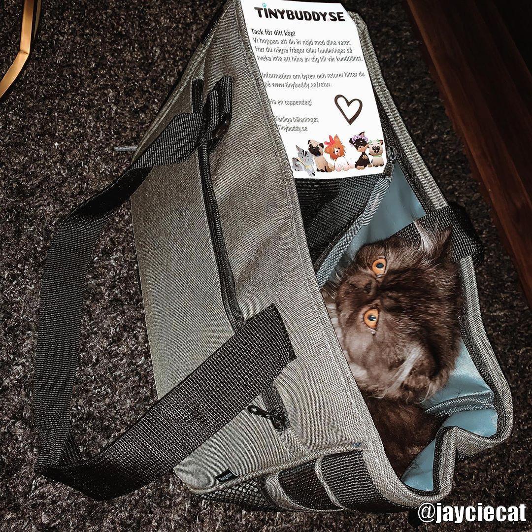 Köp Hundväska för Flyg till din hund från Tinybuddy.se