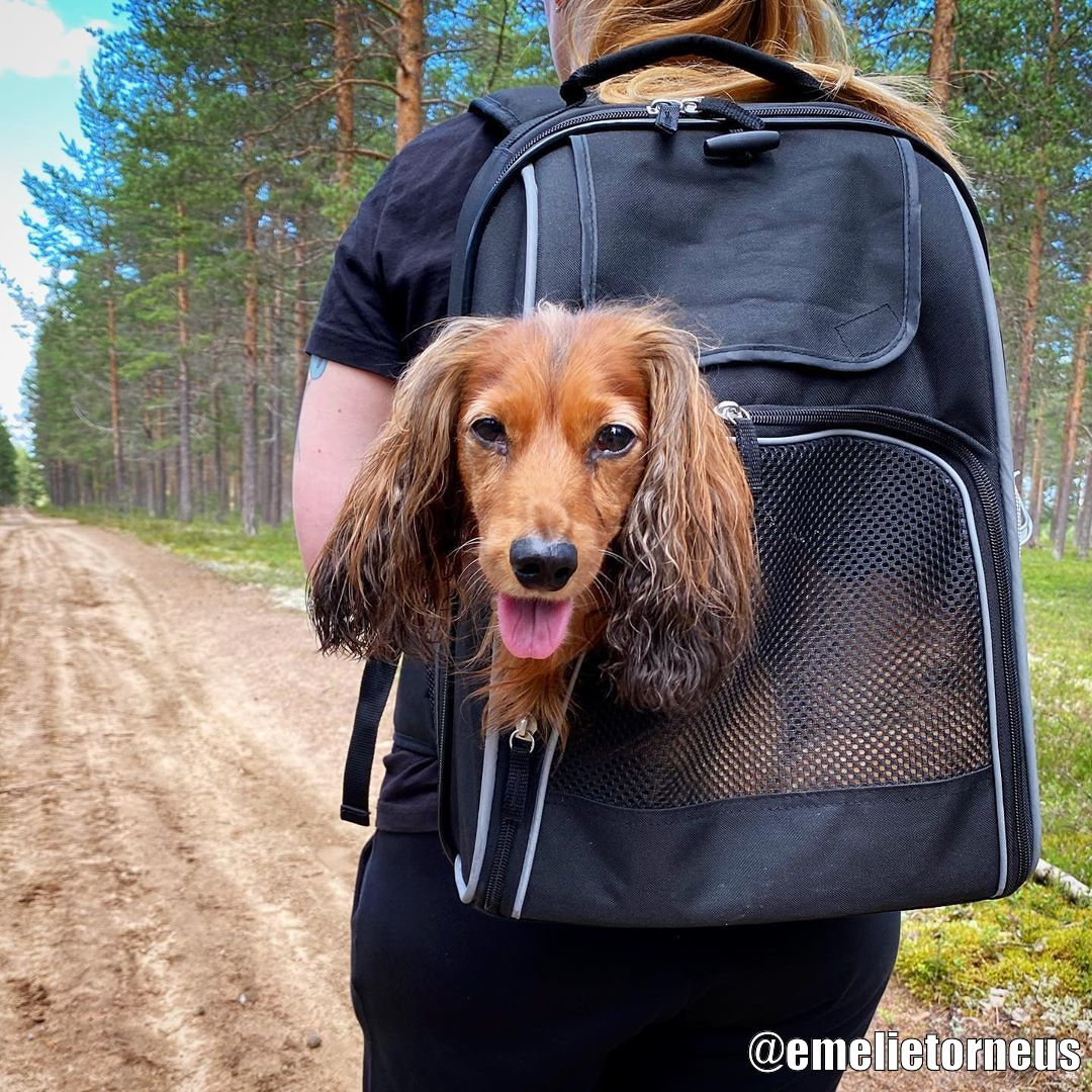 Köp William Ryggsäck 8 kg till din hund från Tinybuddy.se