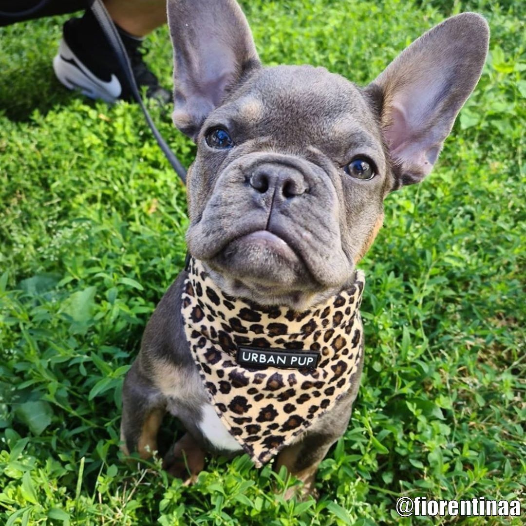 Urban Pup Bandana - Kundbild