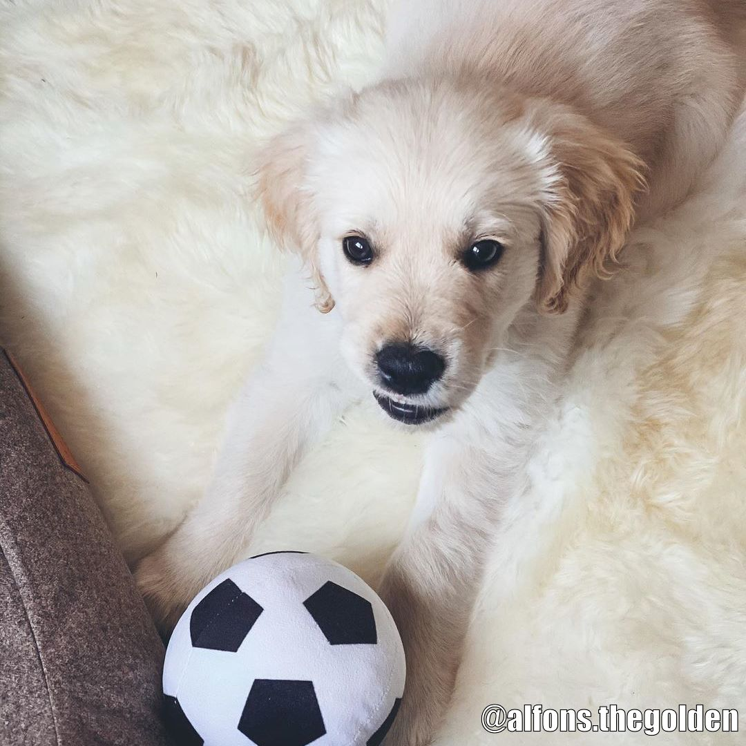 Good Boy Plush Football - Kundbild