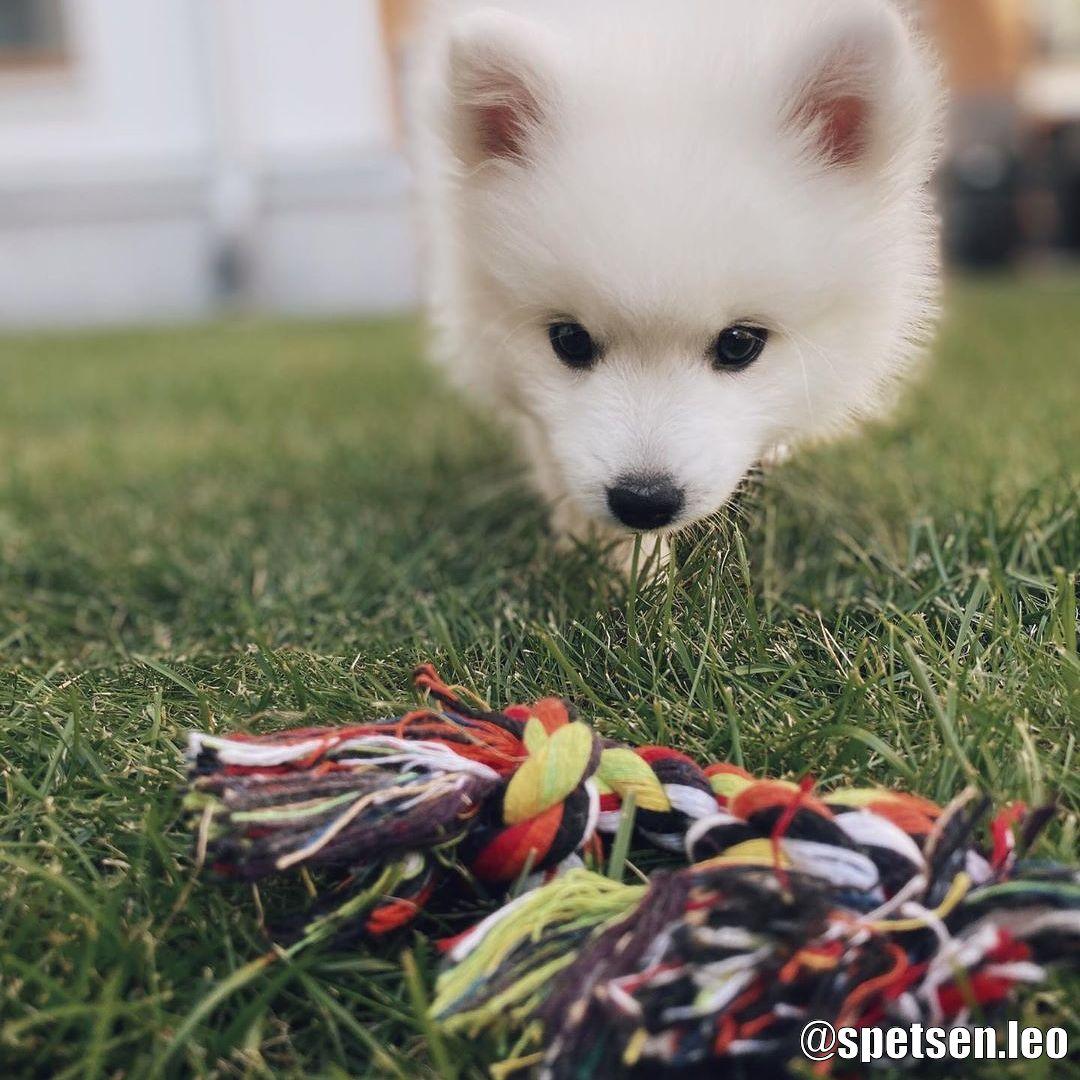 Bomullsrep Hundleksak - Kundbild