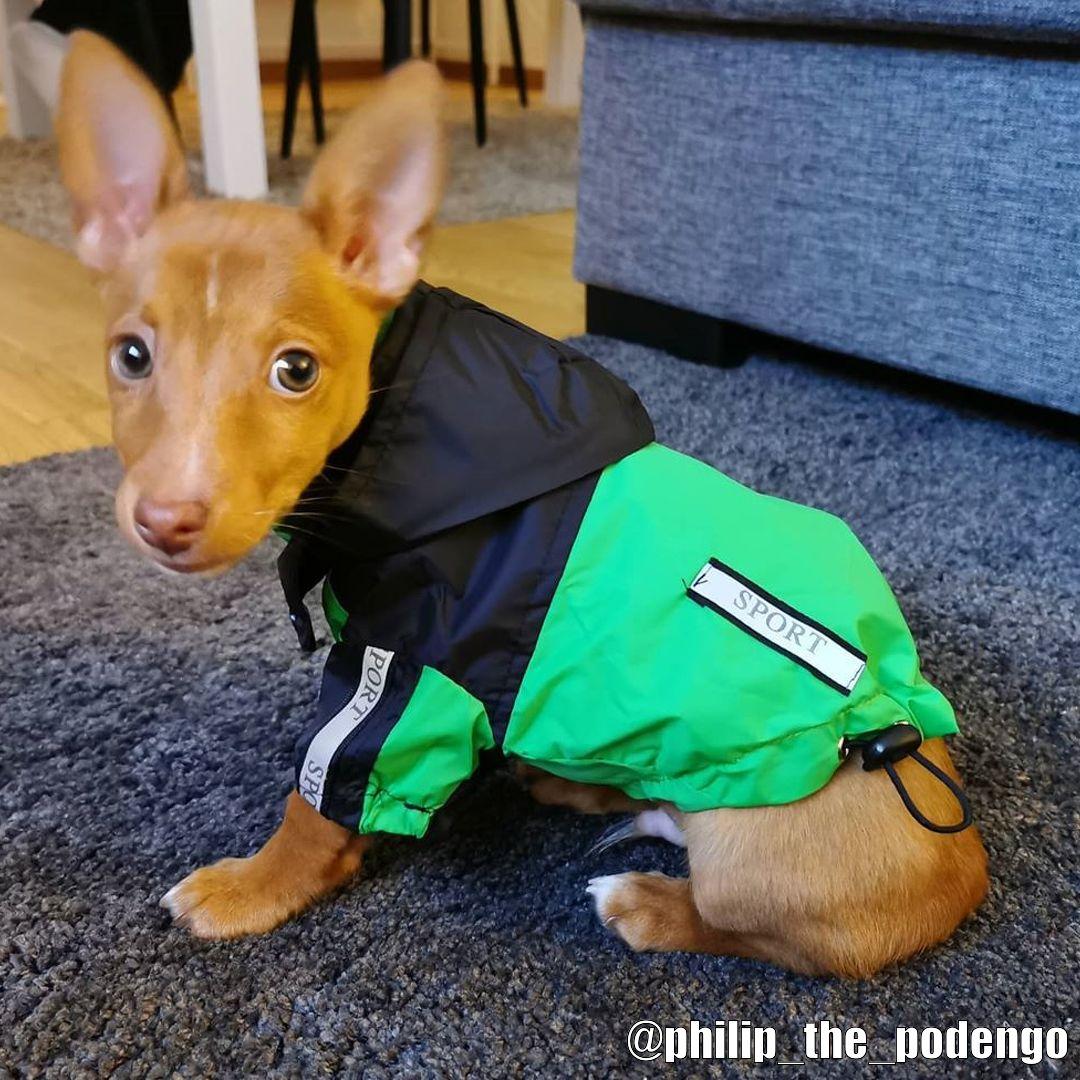 Urban Pup Regnjacka - Kundbild