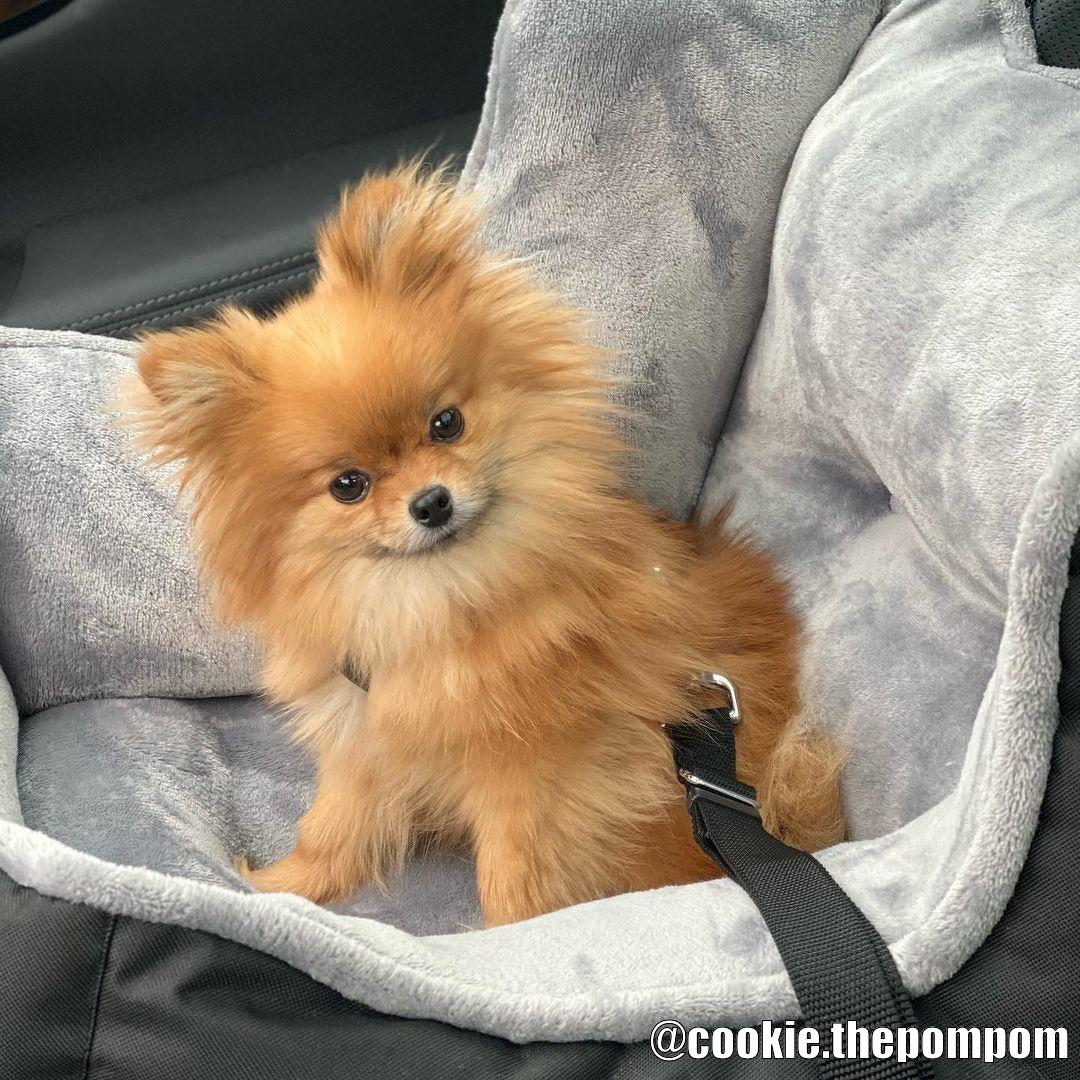Mjuk Bilstol för Hund - Kundbild