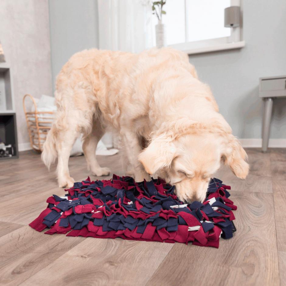 Sniffing Carpet, Nivå 1 Aktivitetsleksak -