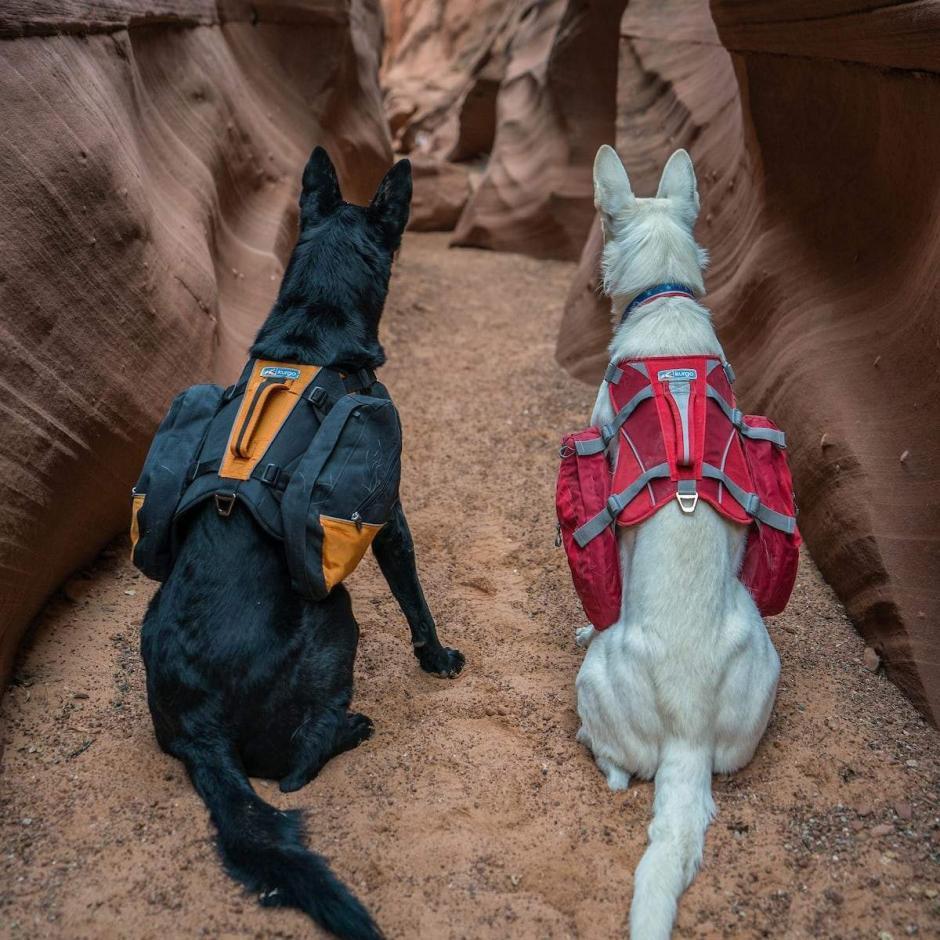 Kurgo Baxter Dog Backpack -