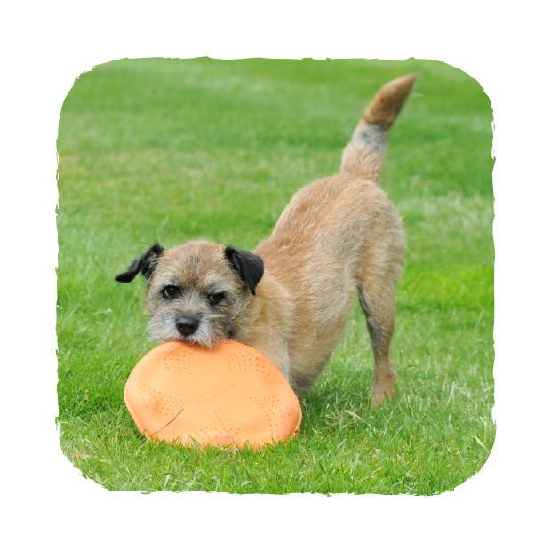 Beco Flyer Hundfrisbee -
