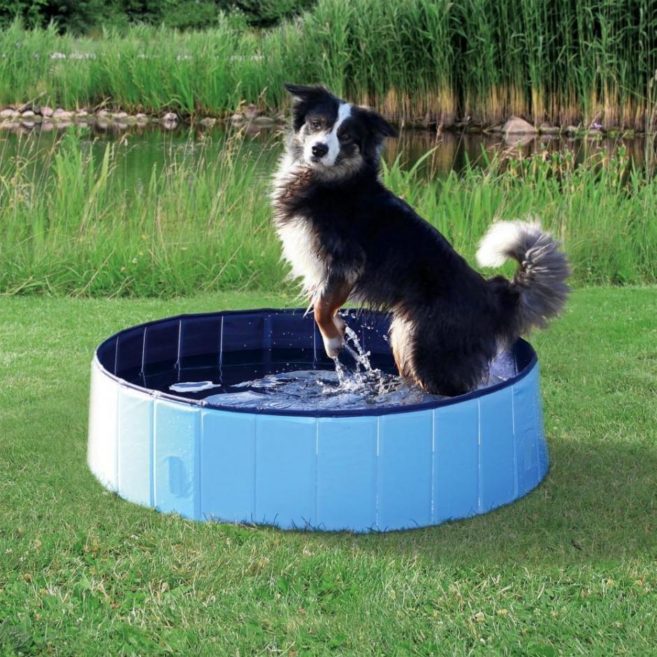 Jollypaw Hundpool -