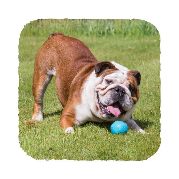 Beco Ball Hundleksak -